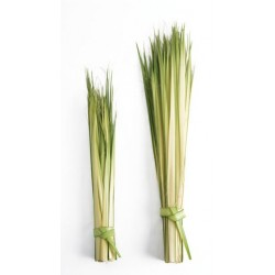 """Long Double Palm Strips, 24"""" to 36"""""""